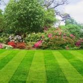 Lawn Care 41