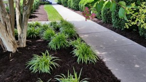 Mulch Installation | Centennial CO Lawn Care & Landscaping Spring Special | Centennial Property Maintenance (303) 713-9306