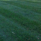 Mowing by Centennial Property Maintenance Centennial CO (303) 713-9306