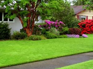 Centennial Property Maintenance | Lawn Care Maintenance |  (303) 713-9306