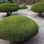 Heritage Greens Lawn Care Landscape Maintenance